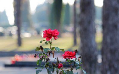 Zasiłek pogrzebowy – ile się czeka?