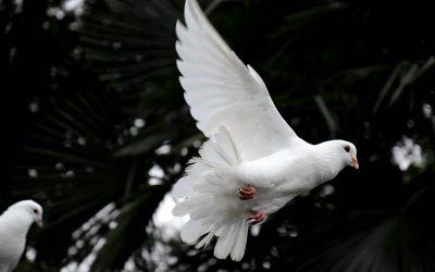 Klepsydra Piła – usługi pogrzebowe najwyższej jakości